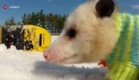 Kayak Yapan Sıçan