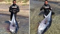 130 kiloluk orkinosu zıpkınla avladı