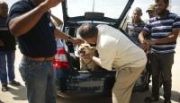Gazzedeki hayvanlara Four Pawstan yardım