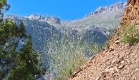 Antalyada yeni bir karanfil türü bulundu