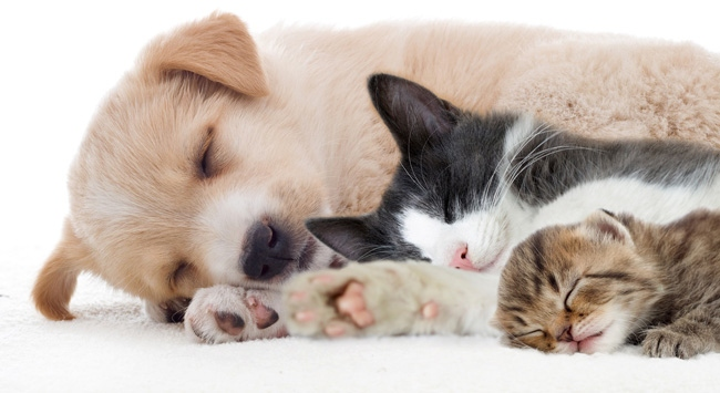 Nikah şekeri yerine kedi köpeklere mama