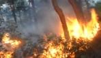 Mudanyada orman yangını