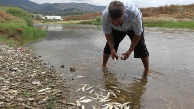 Mert Irmağında balık ölümleri