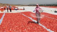 Balıkesirden 3 kıtaya kurutulmuş domates ihracatı