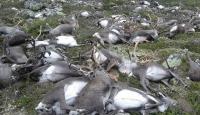 Yıldırım isabet eden 323 ren geyiği öldü