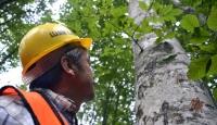 Orman işçilerinin zorlu mesaisi