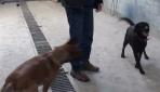 Hain Planı Bozan Kahraman Köpekler