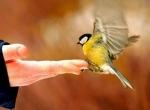 Kuşlar Aleminden...