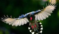 Kuşlar Aleminden Fotoğraflar