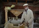 Asırlık çınar, 80 senedir mısır öğütüyor