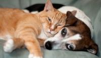 Kedi ve köpeklerde kanser vakaları artıyor