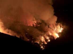 Californiada orman yangınları devam ediyor