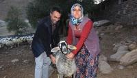 Erzurumda çalınan kuzularını Bingölde buldu