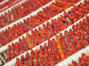 Gaziantepin kurutulmuş sebzeleri dünya mutfaklarında