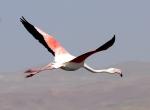 Vandaki kuş ölümlerinde salgın çıkmadı