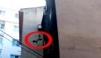 Köpek 5. kattan böyle atladı