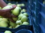 Ispartada elma hasadı