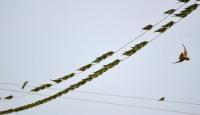"""""""Doğunun Çukurovası"""" göçmen kuşları ağırlıyor"""