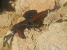 Siirt'te silah ve mühimmat ele geçirildi