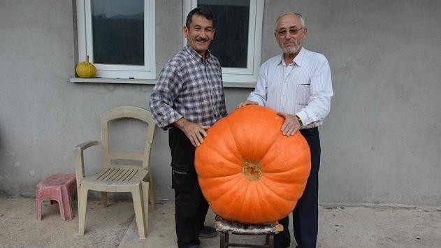 90 kilogramlık bal kabağı yetiştirdi