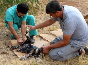 Zifte saplanan köpek yavrusu kurtarıldı