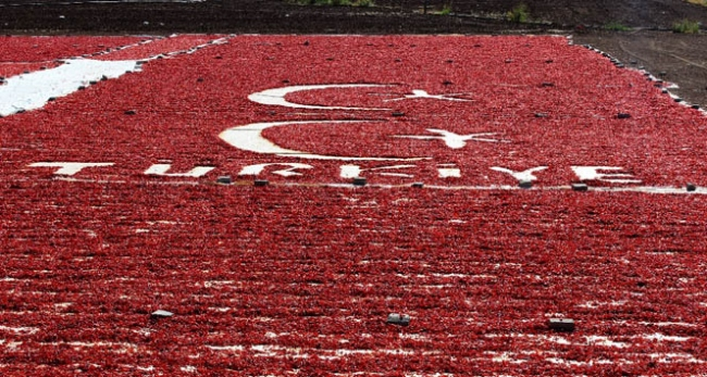 Türkiye ve bayrak sevgisini tarlasına işledi