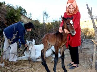 Yaralı at ve yavrusuna vatandaşlar sahip çıktı