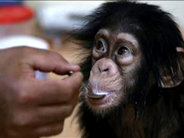 """Minik şempanze """"Can""""a özel bakım"""