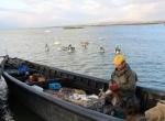 Manyas Gölü balıkçılarının gözü Irakta