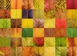 Sonbaharda yaprakların rengi