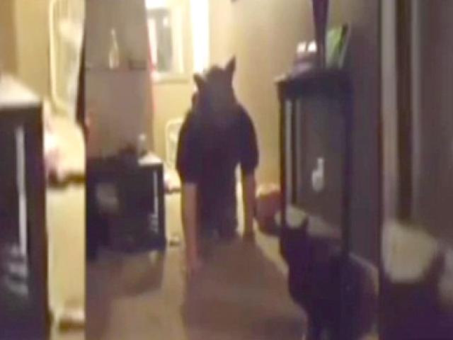 """Kediye """"kurt adam"""" şakası yapılırsa..."""
