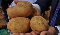 Patateste dışa bağımlılık bitecek