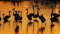 Flamingolardan gün batımında görsel ziyafet