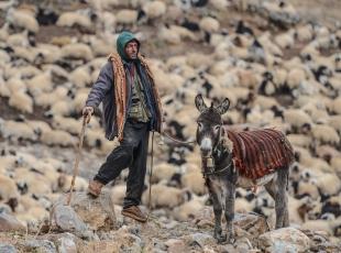 Yayladan koyunlarını indiren besiciler kara yakalandı
