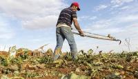 Çiftçilere destek ödemesi yarın yapılacak