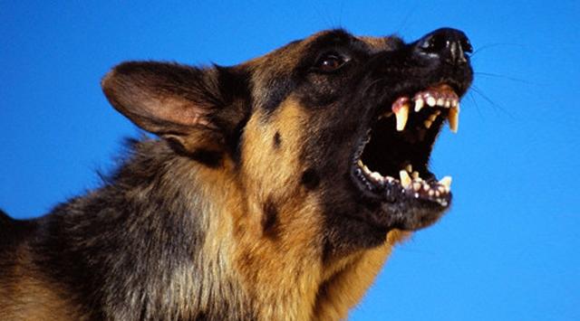 Sokak Köpekleri Bir Adamı Parçaladı