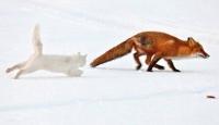 Avcıyla Avın Kapışması