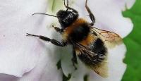 Arı Sokması Kalp Krizine Neden Oldu