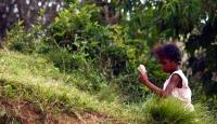 Madagaskarda açlık tehlikesi