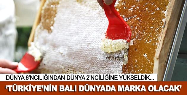 Türkiyenin balı dünyada marka olacak