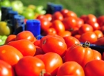 Çanakkale domatesi sonbaharla lezzetlendi