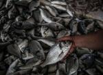 İsrailin Gazzede balık avlama mesafesini artırması