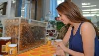 Sokmayan arılara yoğun ilgi