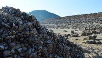 Suyu çekilen barajdan milyonlarca midye çıktı