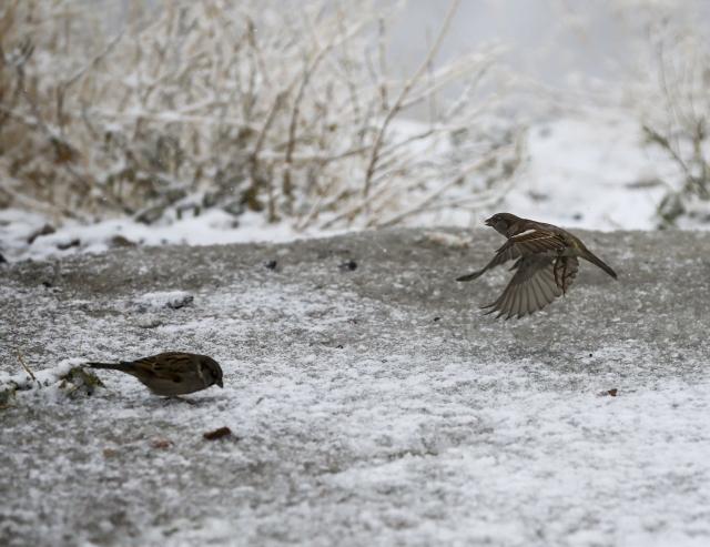 Ankara`da kar yağışı