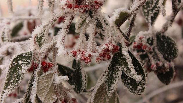Meteorolojiden 3 bölgeye zirai don uyarısı