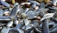 Soğuk hava balık fiyatlarını artırdı