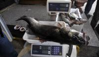 Balıkçının ağına 5 kiloluk levrek takıldı