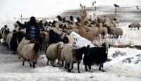 Yarım metre karın altından hayvanlarına yem çıkarıyorlar