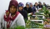 Süs bitkileri üretimi giderek artıyor